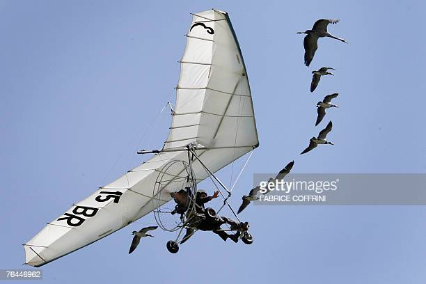 French ultralightpilot Christian Moullec performs with his trained Barnacle geese over Bex airfield during the Switzerland's largest Airshow 01 Sept...