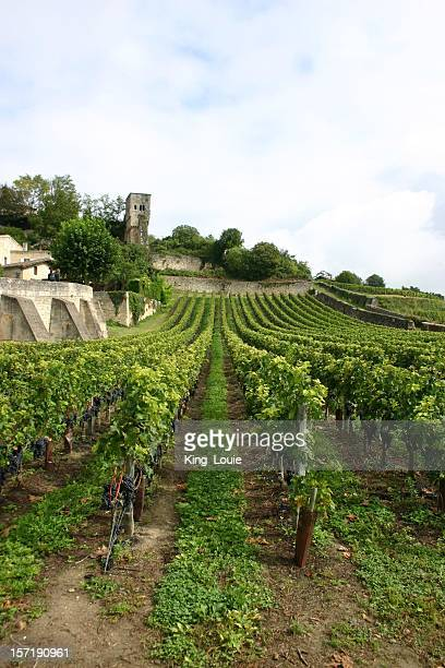 french vineyard portrait - gironde stock pictures, royalty-free photos & images