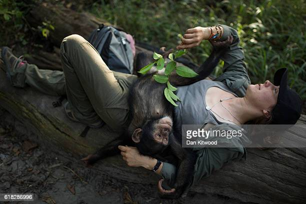 French volunteer Audrey Lenormand relaxes with one of the three baby chimpanzees at the Chimpanzee Conservation Centre on November 25 2015 in Somoria...