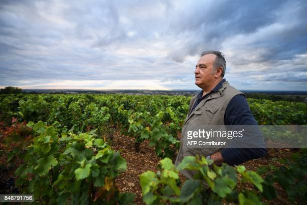French wine maker Dominique Gallois inspects his vineyard 'Combe aux moines' a vintage GevreyChambertin Burgundy wine on September 5 2017 in...