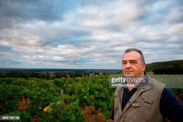 French wine maker Dominique Gallois poses in his vineyard 'Combe aux moines' a vintage GevreyChambertin Burgundy wine on September 5 2017 in...