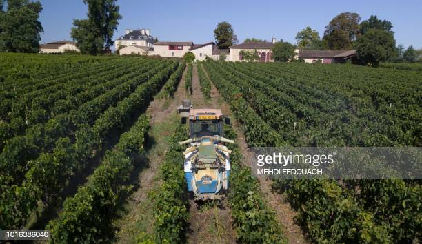 French winegrower Joel Tauzin in his tractor treats grapes against mildew at the Merlet vineyard in Leognan near Bordeaux on August 11 2018 This is...