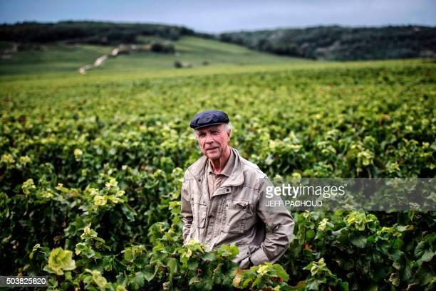 French winemaker Aubert de Villaine poses on September 16, 2015 in a vineyard in Vosne-Romanee, central-eastern France. - Auber head of the...