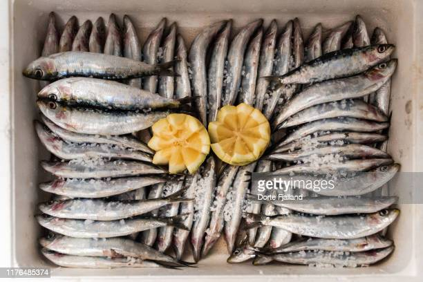 fresh anchovies (boquerones) in a white box, sprinkled with sea salt and a decorative lemon in the middle - dorte fjalland imagens e fotografias de stock