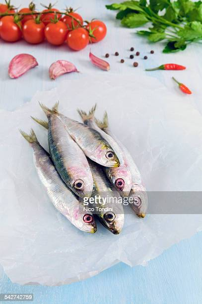 Fresh anchovies on greaseproof paper