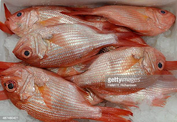 Fresh and beautiful red snapper from New Zealand was just delivered this morning at Seattle Fish Company in Denver Co on April 17 2014 The company...