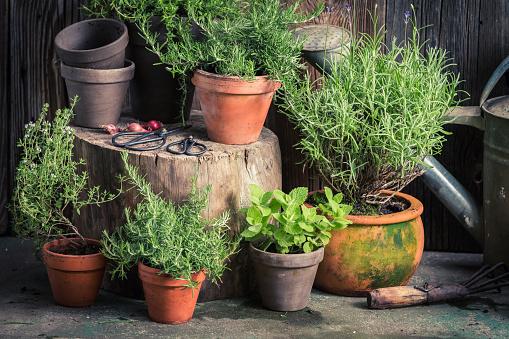 Fresh and green herbs in rustic garden 940936938
