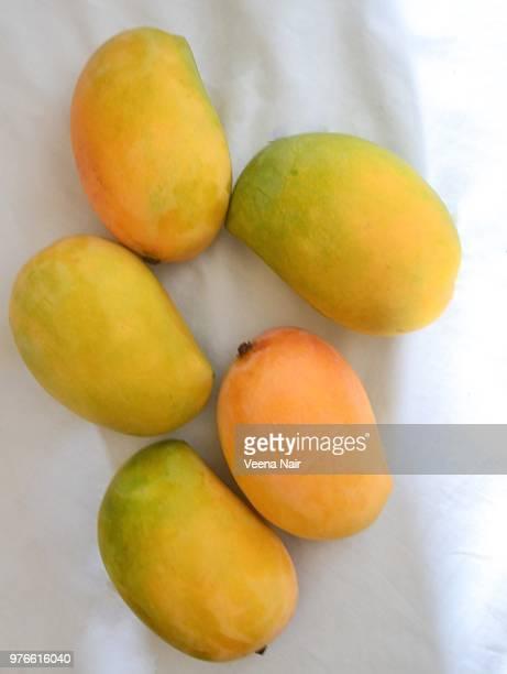 Fresh and ripe kesar mangoes on white background