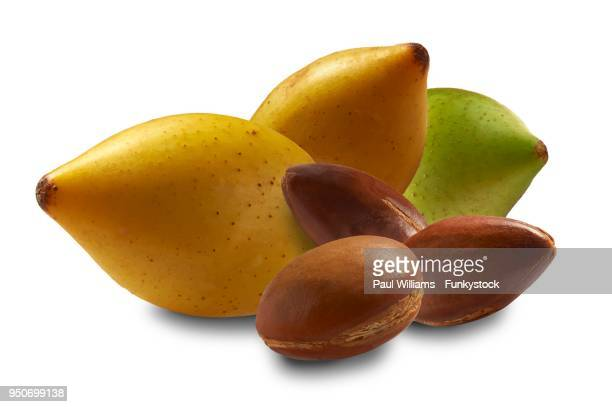 fresh argan fruits and argan nuts (argania spinosa), morocco - argan tree stock pictures, royalty-free photos & images