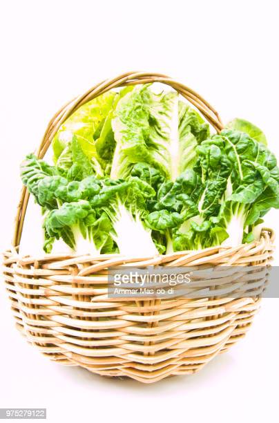 fresh  baby bok choy and cos salad in ratten basket isolated on - baby bok choy stock photos and pictures