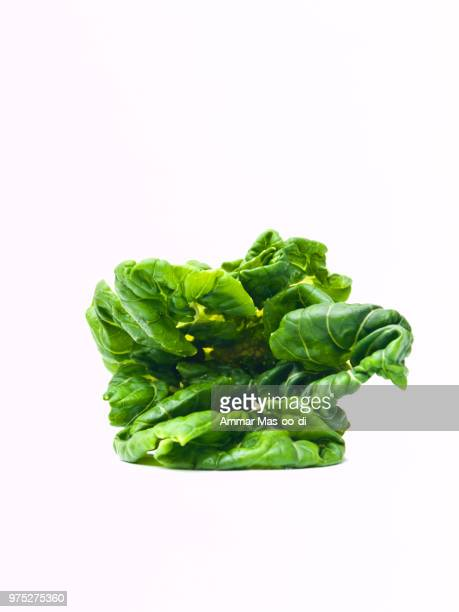 fresh baby bok choy, brassica rapa chinensis,  isolated on white - baby bok choy stock photos and pictures
