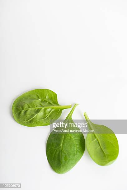 fresh baby spinach - spinach stock pictures, royalty-free photos & images