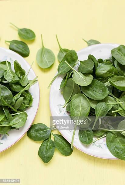 Fresh baby spinach