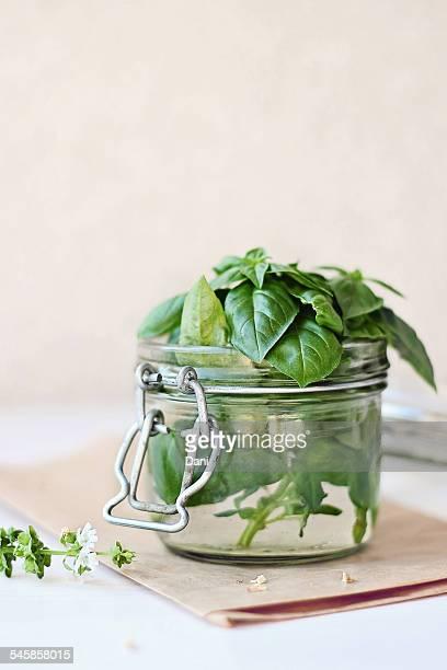 Fresh basil leaves in glass jar