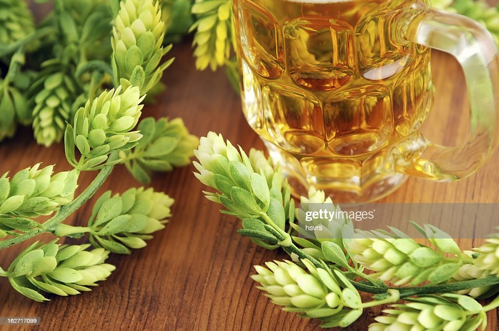 fresh beer glass and hop typical for Oktoberfest : Stock Photo