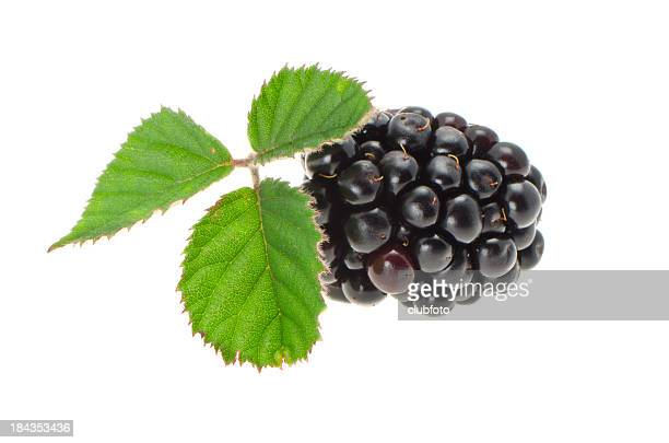 fresh blackberry with leaves - blackberry fruit stock pictures, royalty-free photos & images
