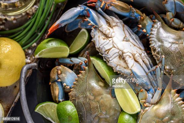 fresh blue crab - crab seafood stock photos and pictures