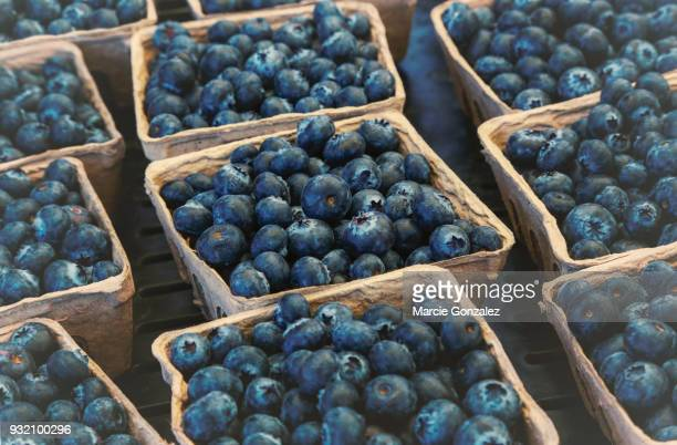 Fresh Blueberry Baskets at Farmers Market
