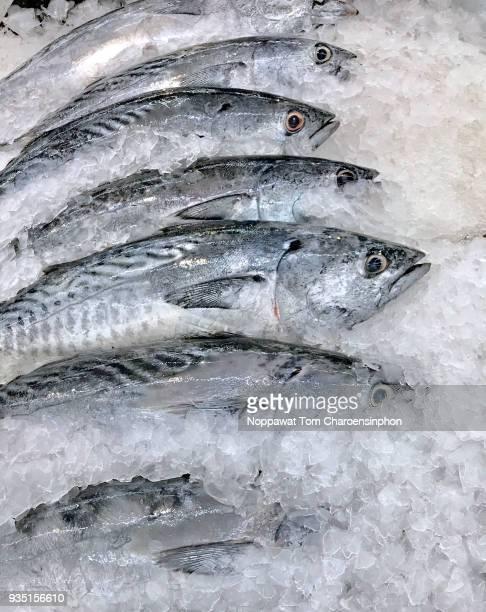 fresh bonito tuna for canning, bangkok, thailand - atún pescado fotografías e imágenes de stock