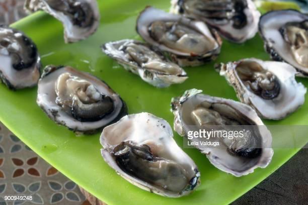 Fresh brackish oysters