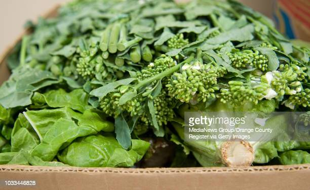 Fresh broccolini a hybrid of broccoli and kale is a donated item at the nonprofit South County Outreach food pantry The variety and quanity of food...