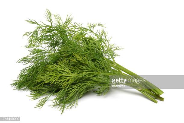 Fresh bunch of green dill herbs