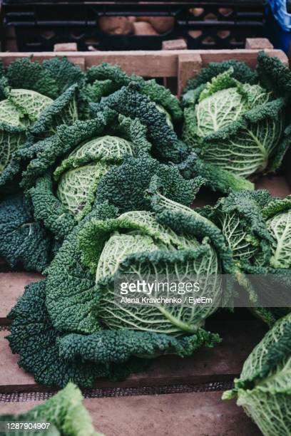 fresh cabbage on sale at a street market. - organic stock pictures, royalty-free photos & images