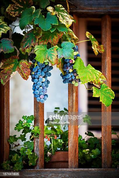 Frische Cabernet Sauvignon Trauben auf alten Balkon