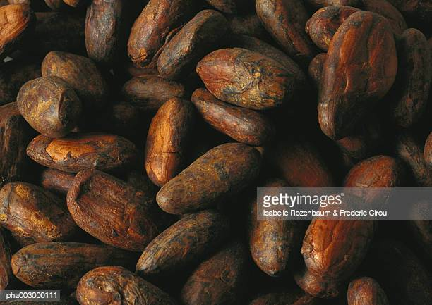 Fresh cacao beans, close-up