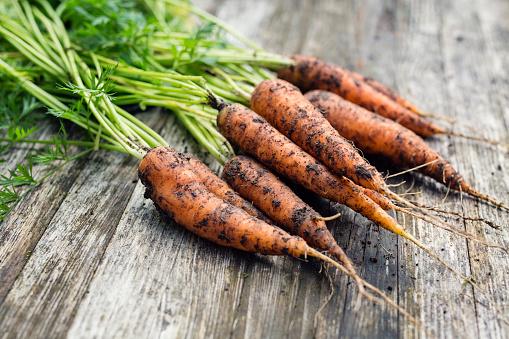 Fresh carrots - gettyimageskorea