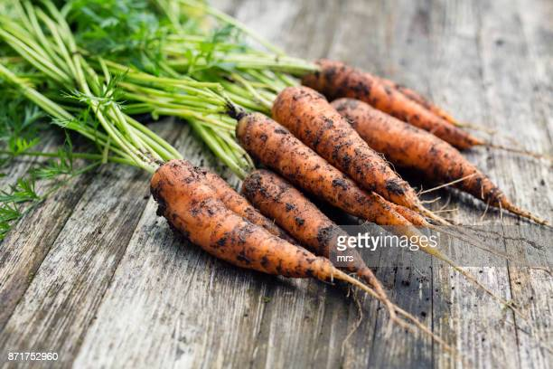 fresh carrots - root vegetable stock pictures, royalty-free photos & images