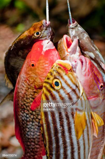 fresh caught fish for sale in la passe on la digue in the seychelles - la digue island stock pictures, royalty-free photos & images