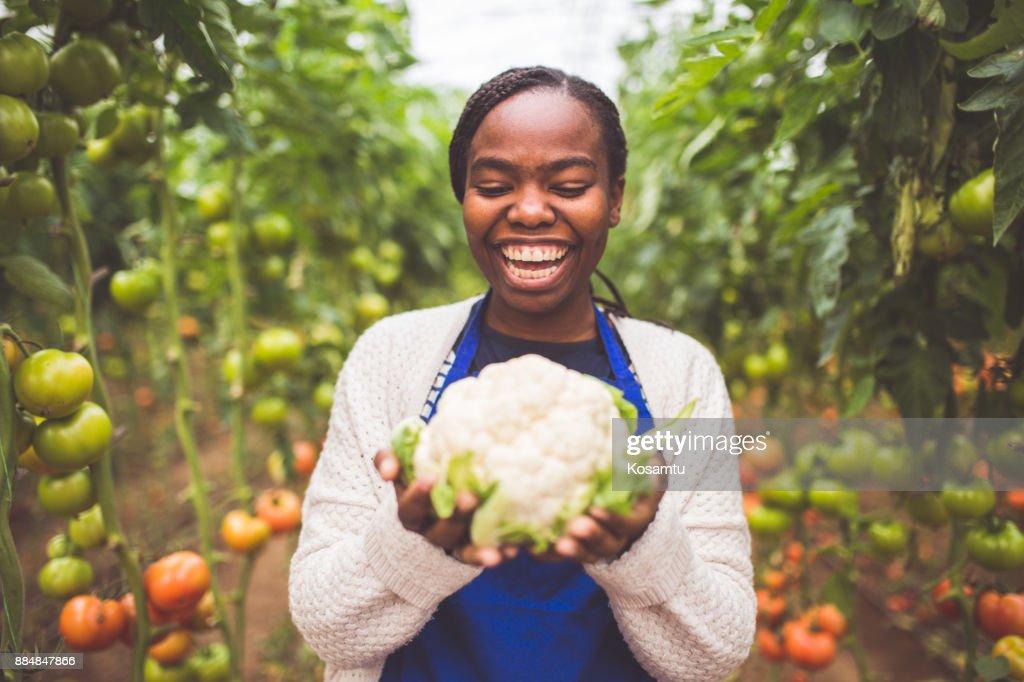 Fresh Cauliflower : Stock Photo