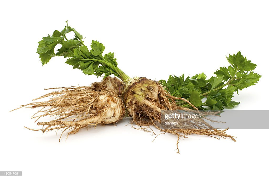 fresh celery : Stock Photo