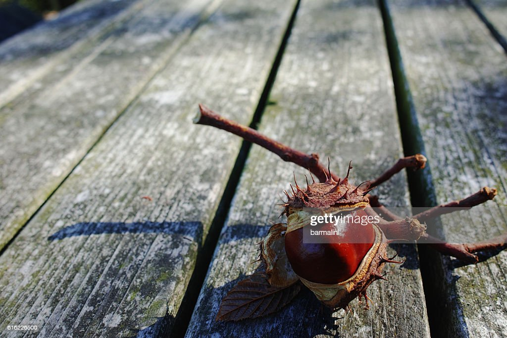 Fresh chestnuts on wooden background : Stockfoto