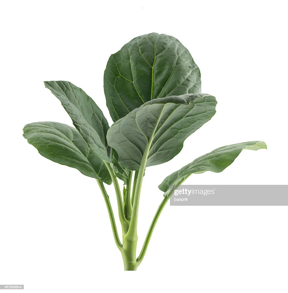 Fresh Chinese Kale Vegetables Isolated On White Stock Photo Getty