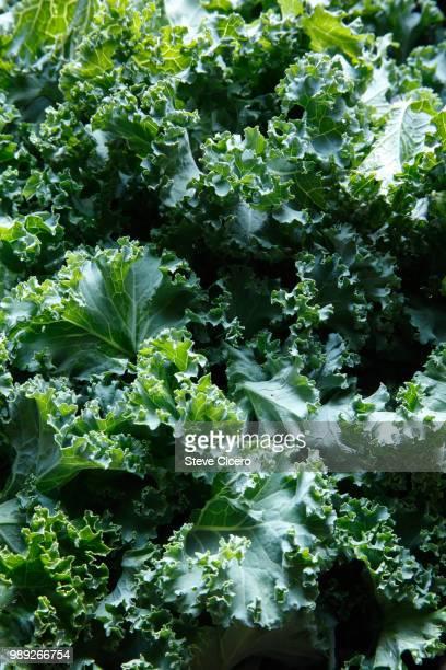 fresh chopped kale close-up