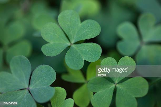 fresh clover - st patricks background stock pictures, royalty-free photos & images