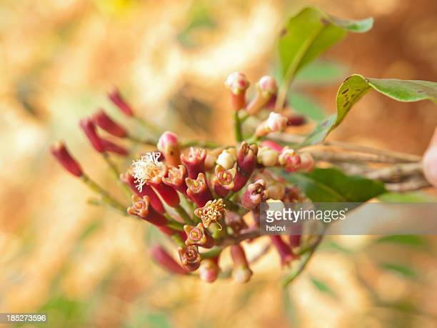 fresh cloves