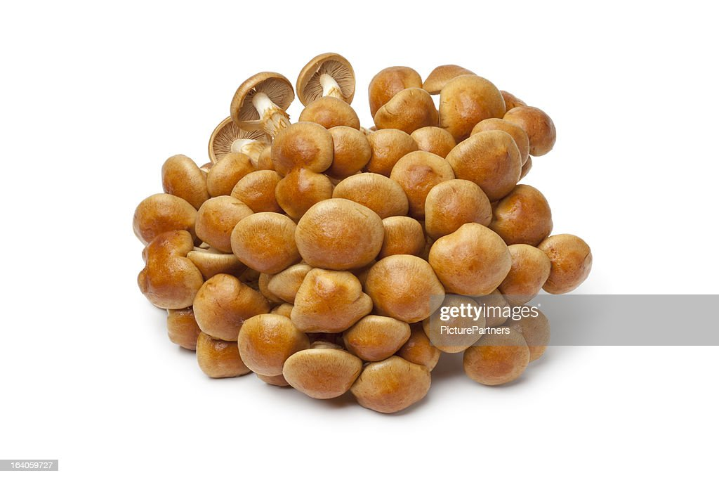 Fresh cluster of Nameko mushrooms : Stock Photo