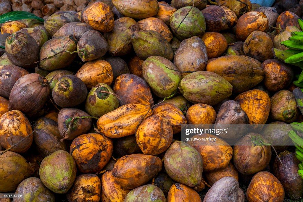 fresh coconuts : Stock Photo