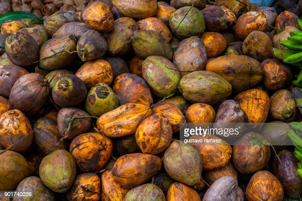 fresh coconuts - coco brown stock-fotos und bilder