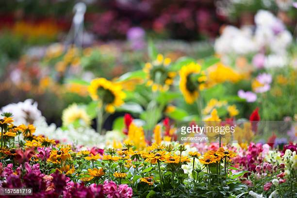 Fresh colorful spring flowers in garden center plant nursery