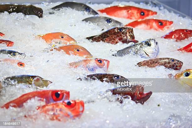 Des poissons tropicaux colorés sur le marché de Taïwan