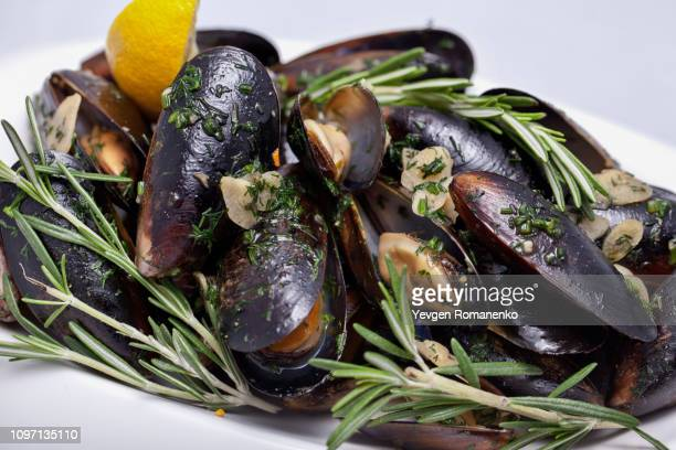 fresh cooked mussels - new zealand foto e immagini stock