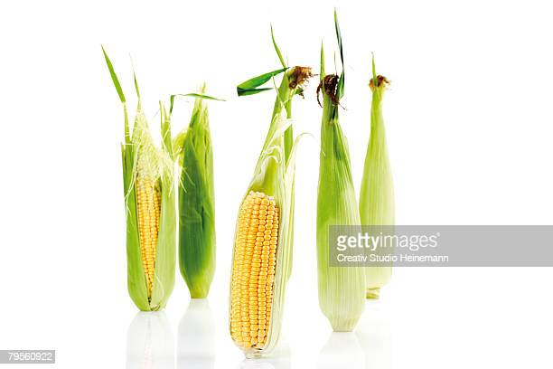 'Fresh corn cobs, close-up'