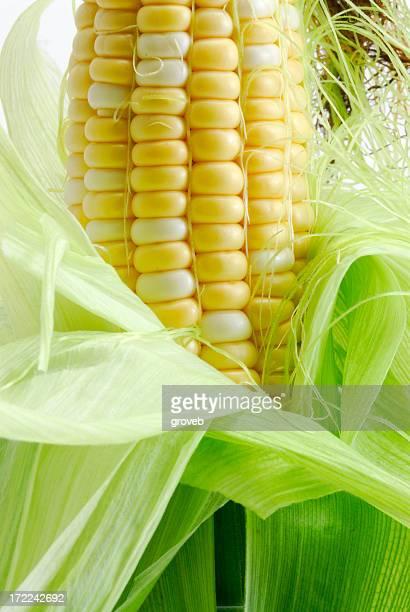 Fresh corn on the cob close up.
