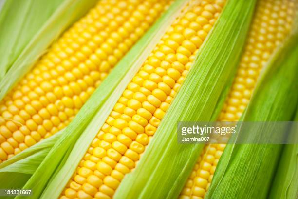 Frischer Mais