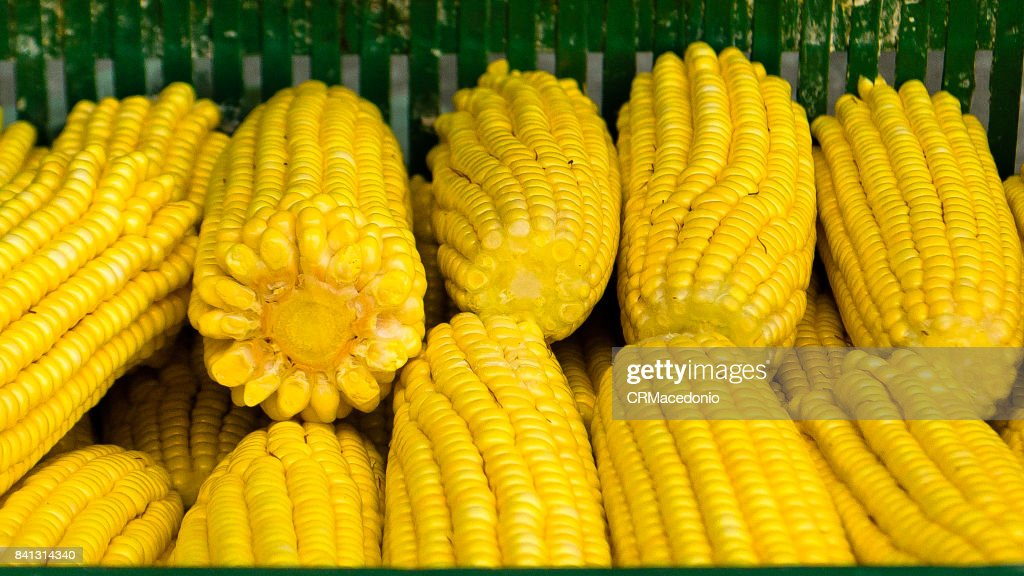 Fresh corn : Stock Photo