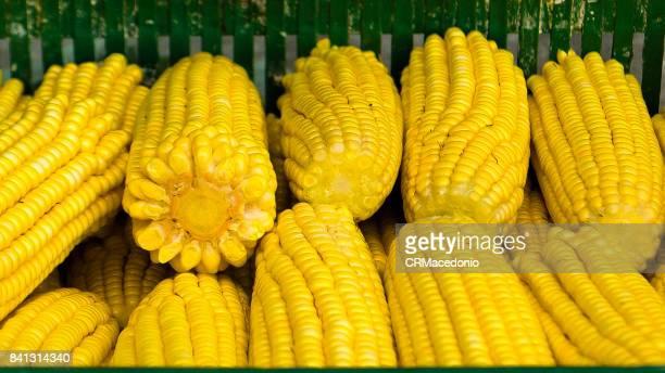 fresh corn - crmacedonio fotografías e imágenes de stock